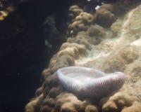 Κοράλλια & θαλάσσια ζωή Στοκ Φωτογραφία