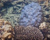 Κοράλλια & θαλάσσια ζωή Στοκ φωτογραφίες με δικαίωμα ελεύθερης χρήσης