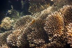 Κοράλλια & θαλάσσια ζωή Στοκ εικόνες με δικαίωμα ελεύθερης χρήσης