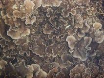 Κοράλλια & θαλάσσια ζωή Στοκ Εικόνα