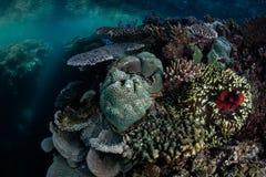 Κοράλλια και Anemone στην ειρηνική κοραλλιογενή ύφαλο Στοκ Φωτογραφίες