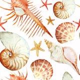 Κοράλλια με τα κοχύλια και τα καβούρια ελεύθερη απεικόνιση δικαιώματος