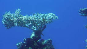 Κοράλλια στη Ερυθρά Θάλασσα απόθεμα βίντεο