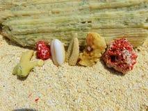 Κοράλλια των νησιών των Μαλδίβες Στοκ εικόνα με δικαίωμα ελεύθερης χρήσης