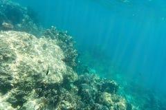 Κοράλλι και υποβρύχια άποψη σχετικά με το φως ήλιων Στοκ Εικόνες