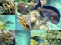 Κοράλλι και ψάρια στη Ερυθρά Θάλασσα, Αίγυπτος, Αφρική Στοκ Φωτογραφίες