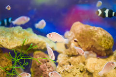 Κοράλλι και ψάρια στη θάλασσα στοκ εικόνες