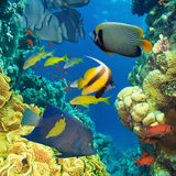 Κοράλλι και ψάρια στοκ εικόνα
