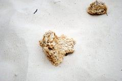 Κοράλλι παραλιών άμμου Στοκ φωτογραφίες με δικαίωμα ελεύθερης χρήσης