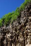 Κοράλλι που γίνεται ασβεστόλιθος Στοκ φωτογραφία με δικαίωμα ελεύθερης χρήσης