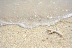 Κοράλλι που σπάζουν και απολύτως στην παραλία στοκ εικόνες με δικαίωμα ελεύθερης χρήσης