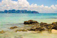 Κοράλλι στην εστίαση παραλιών στο κοράλλι Στοκ εικόνα με δικαίωμα ελεύθερης χρήσης