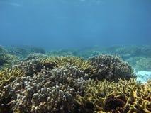 Κοράλλι στη βαθιά μπλε θάλασσα Στοκ φωτογραφία με δικαίωμα ελεύθερης χρήσης