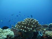 Κοράλλι στη βαθιά μπλε θάλασσα Στοκ Εικόνες