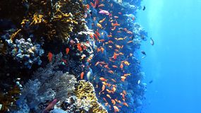 Κοράλλι τοίχων Στοκ εικόνα με δικαίωμα ελεύθερης χρήσης