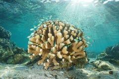 Κοράλλι υποβρύχιο με τα τροπικά ψάρια και το φως του ήλιου Στοκ Φωτογραφίες