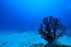 κοράλλι Στοκ Εικόνες