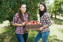 Κορίτσια με τη Apple στον οπωρώνα της Apple Στοκ Εικόνα