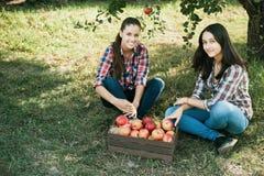 Κορίτσια με τη Apple στον οπωρώνα της Apple Στοκ εικόνες με δικαίωμα ελεύθερης χρήσης