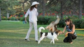 κορίτσια σκυλιών που παί&zet φιλμ μικρού μήκους
