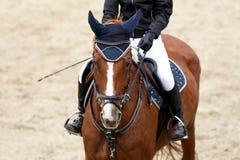 Κορίτσι αναβατών στην προηγμένη δοκιμή εκπαίδευσης αλόγου σε περιστροφές στον ιππικό ανταγωνισμό στοκ εικόνες