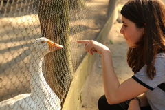 Κορίτσι εφήβων στον υπαίθριο ζωολογικό κήπο με τη χήνα στο κλουβί Στοκ εικόνα με δικαίωμα ελεύθερης χρήσης