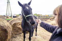 Κορίτσι και άλογο Στοκ φωτογραφία με δικαίωμα ελεύθερης χρήσης