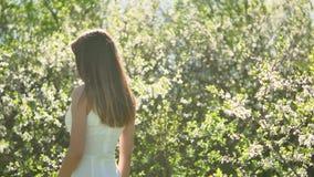 Κορίτσι και ανθίζοντας κεράσι Το κορίτσι στέκεται στο ανθίζοντας κεράσι κήπων φύσης Στοκ φωτογραφία με δικαίωμα ελεύθερης χρήσης