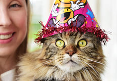 Κορίτσι και γάτα στοκ φωτογραφία