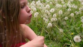 Κορίτσι και πτήση πικραλίδων απόθεμα βίντεο