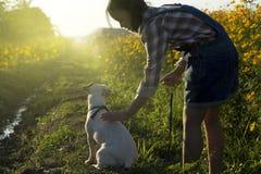 κορίτσι και σκυλί σκιαγραφιών στον κίτρινο τομέα λουλουδιών Στοκ Φωτογραφίες