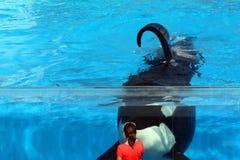 Κορίτσι και φάλαινα Στοκ Φωτογραφίες