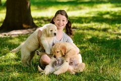 Κορίτσι και χρυσά retriever κουτάβια στοκ εικόνες