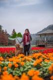 Κορίτσι και χρυσό retriever στα λουλούδια Στοκ Εικόνα