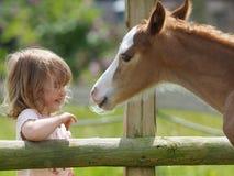 Κορίτσι και foal Στοκ φωτογραφίες με δικαίωμα ελεύθερης χρήσης