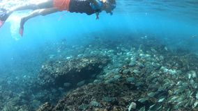 Κορίτσι κολύμβησης με αναπνευστήρα στο νησί Felicite φιλμ μικρού μήκους
