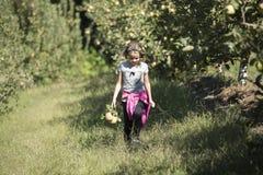 κορίτσι μήλων λίγη επιλογ στοκ φωτογραφία με δικαίωμα ελεύθερης χρήσης