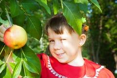 κορίτσι μήλων που κρατά το υπαίθριο πορτρέτο στοκ εικόνα με δικαίωμα ελεύθερης χρήσης