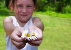 κορίτσι μαργαριτών που προσφέρει τις νεολαίες Στοκ φωτογραφίες με δικαίωμα ελεύθερης χρήσης
