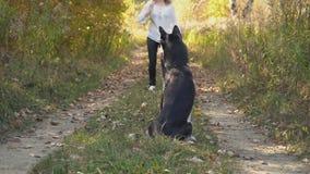 Κορίτσι με μια φυλή σκυλιών γεροδεμένη φιλμ μικρού μήκους
