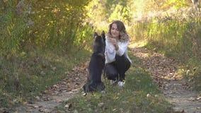Κορίτσι με μια φυλή σκυλιών γεροδεμένη απόθεμα βίντεο
