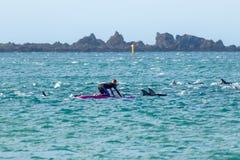 Κορίτσι με τα δελφίνια στον κόλπο της Νέας Ζηλανδίας Lyall Στοκ Εικόνα
