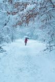 Κορίτσι με την ομπρέλα σε ένα χειμερινό πάρκο στοκ εικόνες