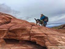 Κορίτσι με τη κάμερα και ένα σκυλί Στοκ Εικόνες