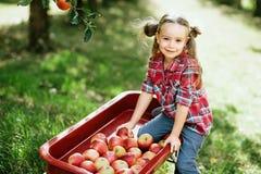 Κορίτσι με τη Apple στον οπωρώνα της Apple Στοκ Εικόνες