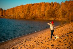 Κορίτσι με το σκυλί κόλλεϊ συνόρων στην παραλία στην παραλία κίτρινο δάσος φθινοπώρου στο υπόβαθρο στοκ εικόνες
