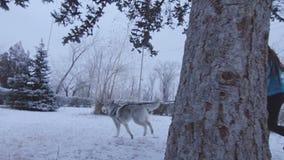 Κορίτσι με το σκυλί που τρέχει μέσω του πάρκου απόθεμα βίντεο