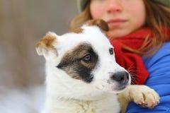 Κορίτσι με το σκυλί στο χειμερινό πάρκο Στοκ φωτογραφία με δικαίωμα ελεύθερης χρήσης