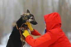 Κορίτσι με το σκυλί στο χειμερινό πάρκο Στοκ Φωτογραφίες