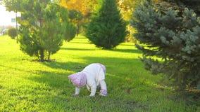 Κορίτσι νηπίων στο πάρκο φιλμ μικρού μήκους